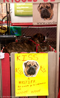 Carolina Mastiff Rescue-0645