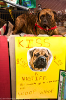 Carolina Mastiff Rescue-0658